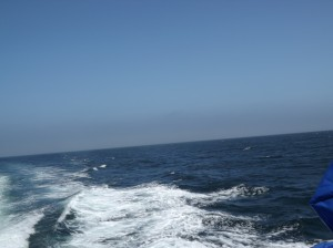 A view of the sea behind our ferry.