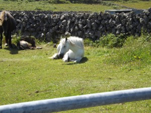 There were lots of animals on our route - cows, chickens, horses, and even seals!